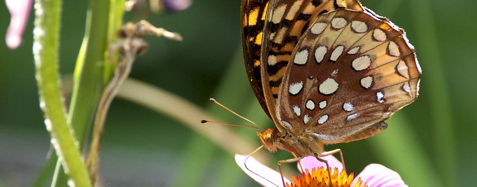 Name That Butterfly