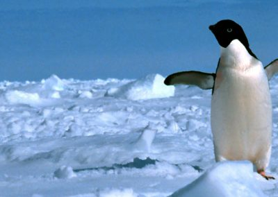 Walk Like a Penguin